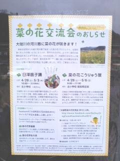 菜の花交流会チラシ