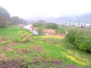 雨の日の葉の花・柾内橋
