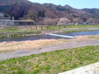 菜の花・河川敷2