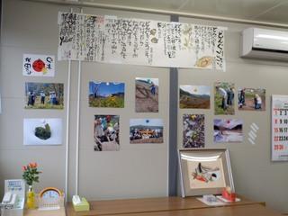 菜の花・展示3